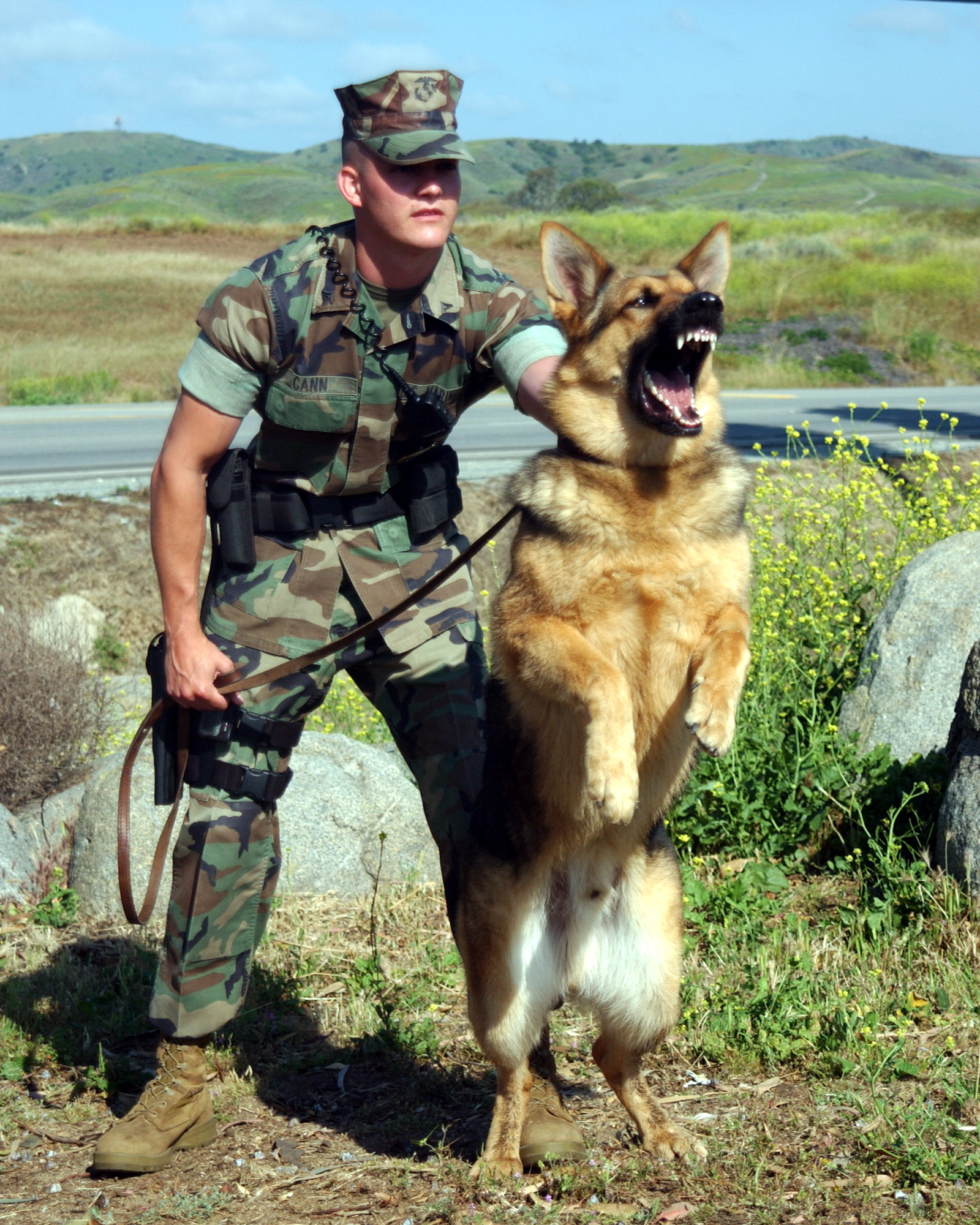 War Dogs Full Movie Mp