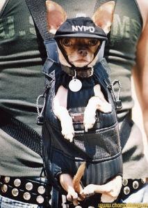 Reddit Navy Seals >> funny police dog pics | K9 PRIDE