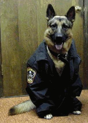 funny police dog pics | K9 PRIDE