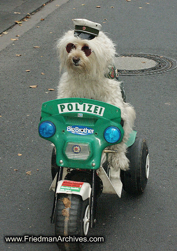 http://k9pride.files.wordpress.com/2008/04/police_dog.jpg
