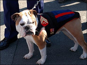 Marine Corps Mascot Retires | K9 PRIDE