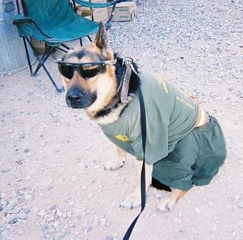 Reddit Navy Seals >> funny police dog pics   K9 PRIDE