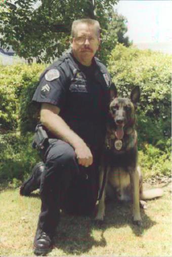 guard dog training: a Belgian Malinois police dog attacking his dog ...