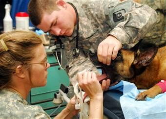 dogoperation2