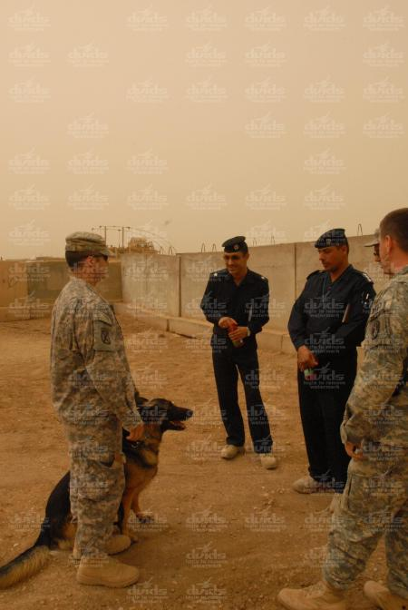 iraqi-k9-21