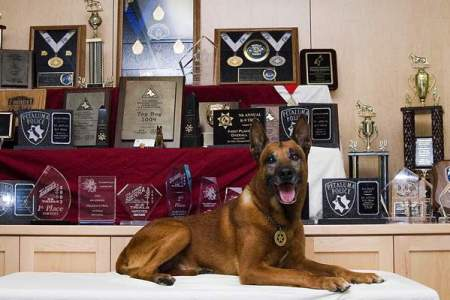 petaluma-police-dog