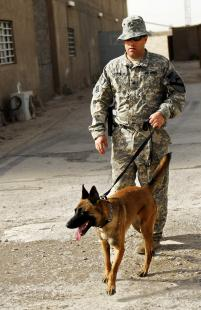 Vigo the Military Working Dog with his Handler in Afghanistan - a ...