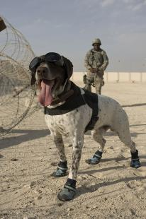 Military Dog Crate For Sale